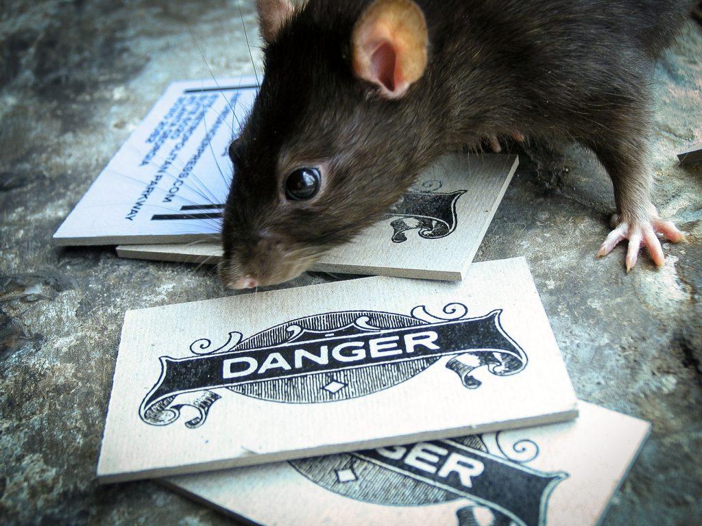 Danger Press Business Cards