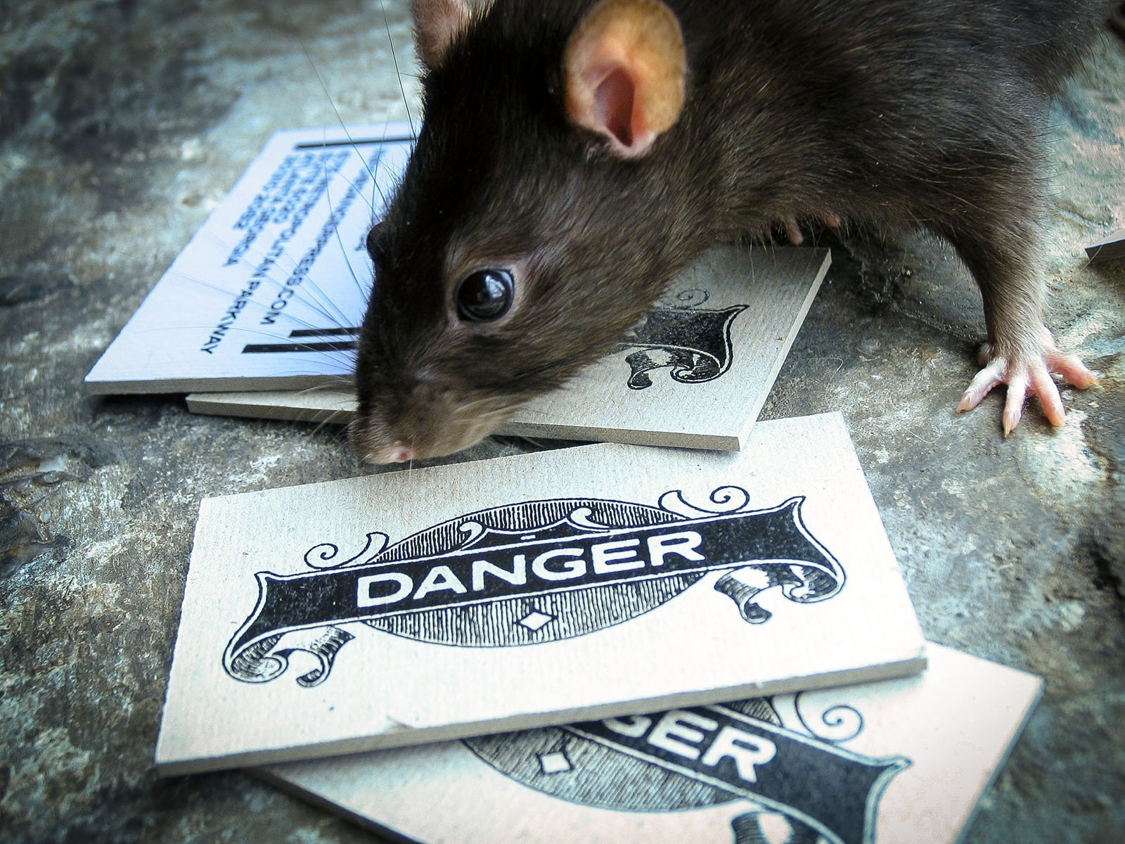 Danger Press Business Cards